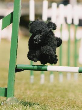 Posh Paws At Your Doors Mobile Dog Groomer Mobile Dog