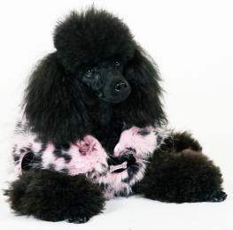 Surprising Posh Paws At Your Doors Mobile Dog Groomer Mobile Dog Home Interior And Landscaping Analalmasignezvosmurscom